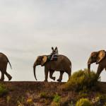 animais-africa-do-sul
