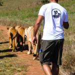 passeio-com-os-animais-africa-do-sul