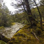 floresta2